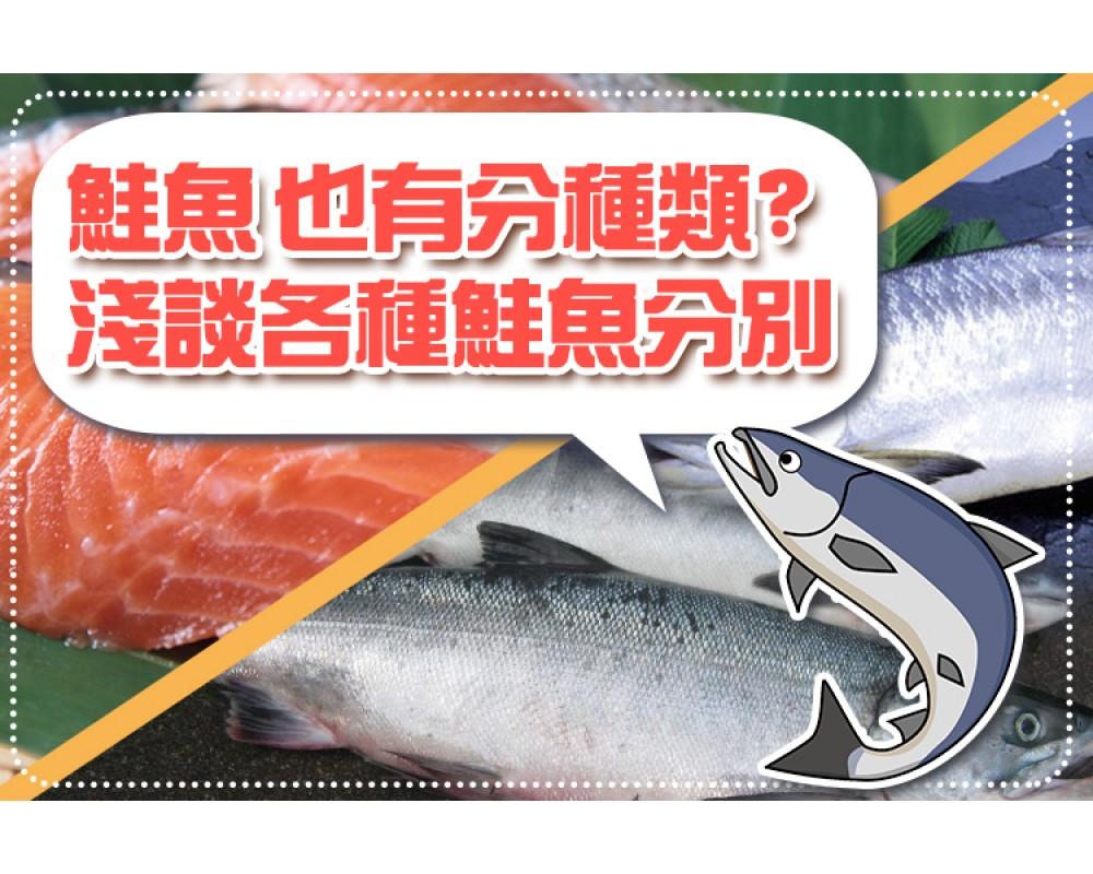 【海口味課堂】鮭魚 也有分種類? 淺談各種鮭魚分別